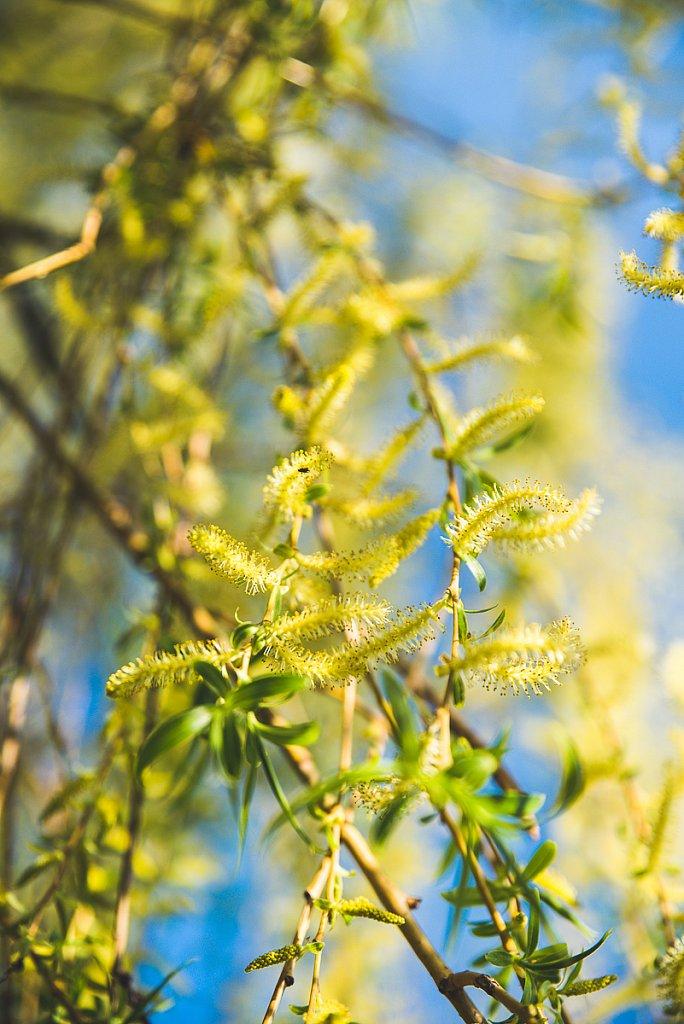 5593-Blume.jpg