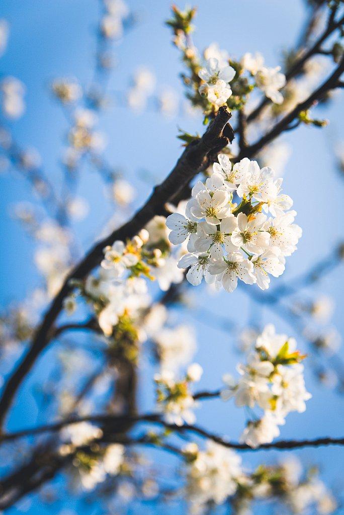 5787-Blume.jpg